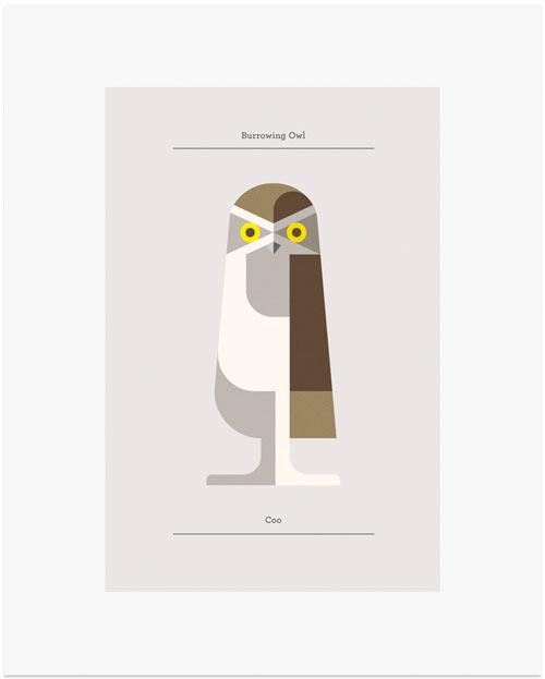 josh-brill-owls-2