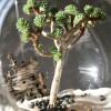 modern-plants-2-zen-detail