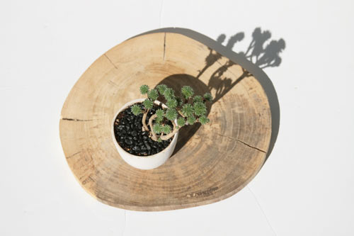 modern-plants-4-jtree-potted