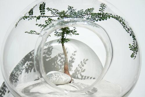modern-plants-9-opi