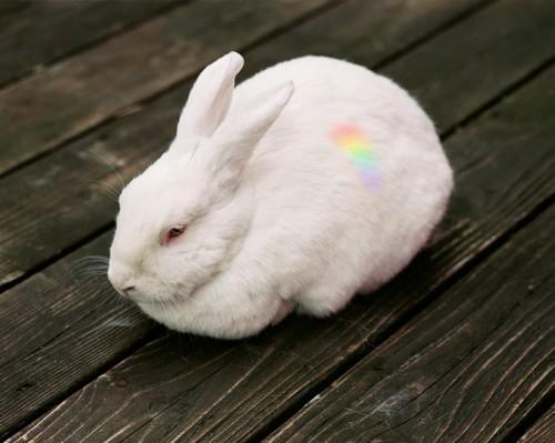 rabbit-500x399