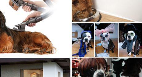 Dog Milk: Best of February 2011