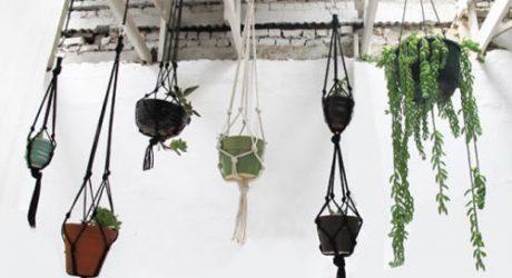 Make A Hanging Succulent Garden