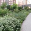 shawn-henderson-ff-5-garden