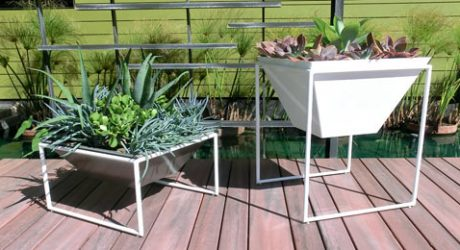 Haskell's New Trapa Planters