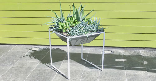 Get Out! Haskells New Trapa Planters