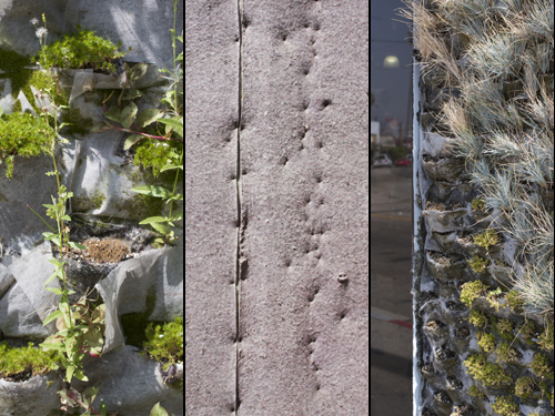 MilkWeed: Blank Slate   Garden Walls