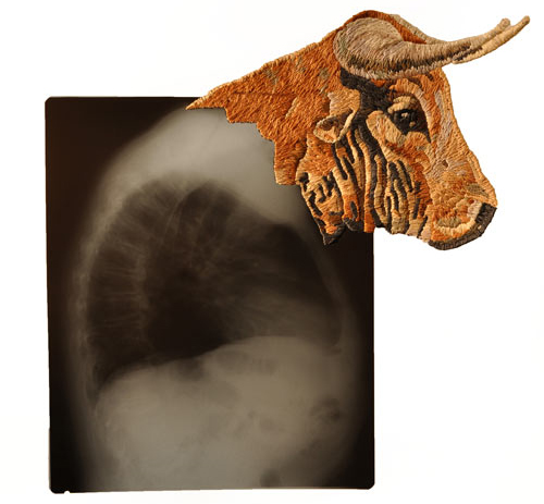 Embroidered X Rays by Matthew Cox in main art  Category