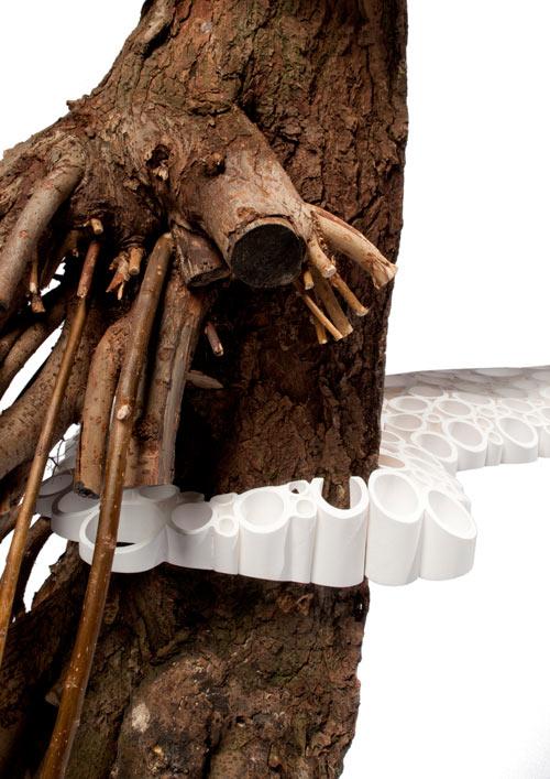 tree-fungus3
