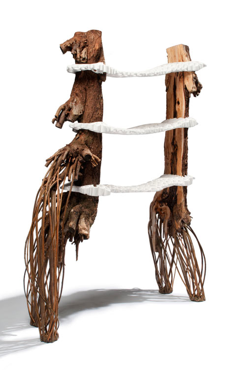 Tree Fungus by Floris Wubben in home furnishings  Category