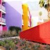 Saguaro_PinkPurpleField