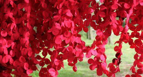 Flower Explosion by Nasia Burnet