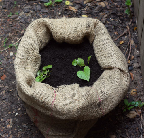 SweetPotato_Planter