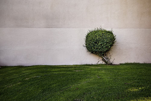 artlica-a-tree