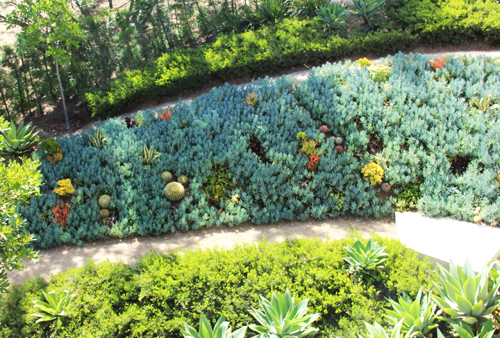 MilkWeed: Succulent Tapestry Lawn in main interior design  Category