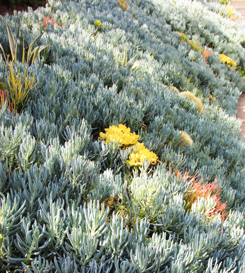 SucculentTapestry_LushLife_Panorama