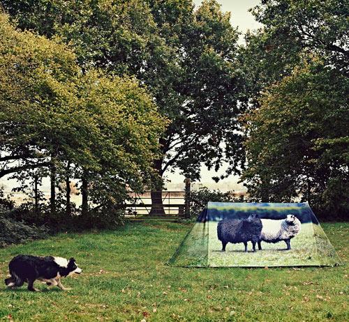 FieldCandy-6-Animal-Farm
