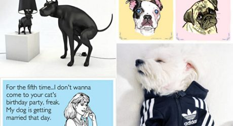 Dog Milk: Best of June 2012