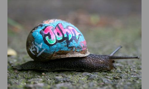 F5-Pia-Wustenberg-snail