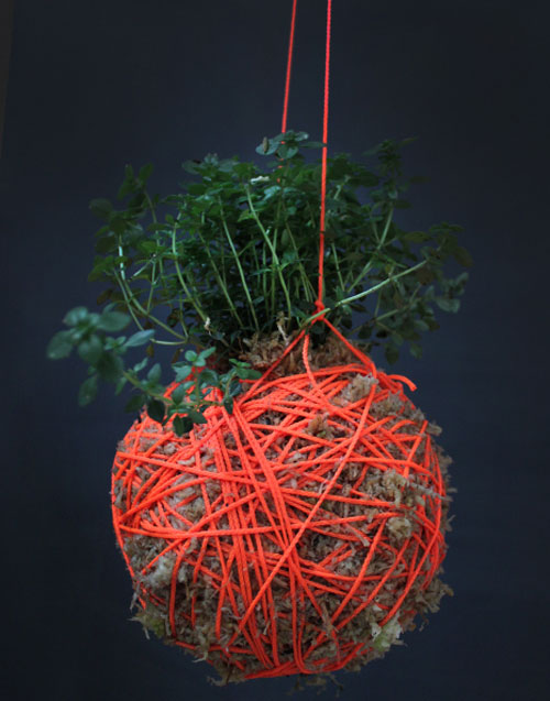 Moss Ball Moss Ball Hanging Plants by