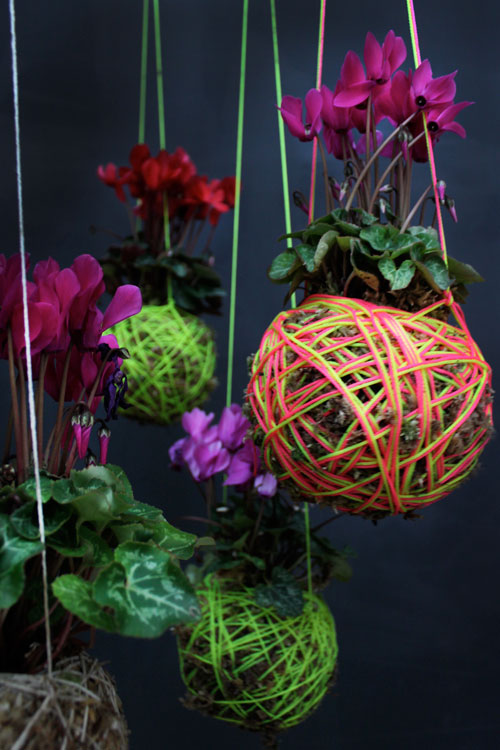 Moss Ball Hanging Plants by Mister Moss in main interior design home furnishings  Category