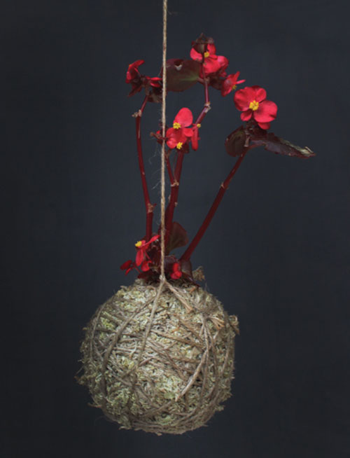 Moss Ball Hanging Plants by Mister Moss in interior design home furnishings  Category