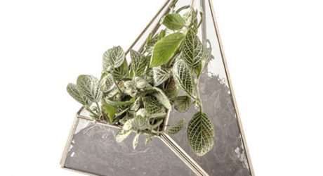 æther Geometric Glass and Metal Terrariums