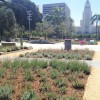 GrandPark_lavender