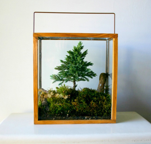 Bonsai_Terrarium