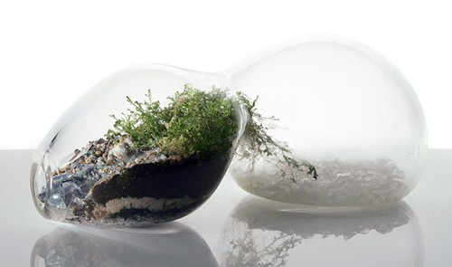 MilkWeed: Go Green During Winter with Terrariums