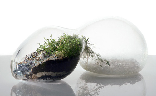 MilkWeed: Go Green During Winter with Terrariums in main interior design  Category