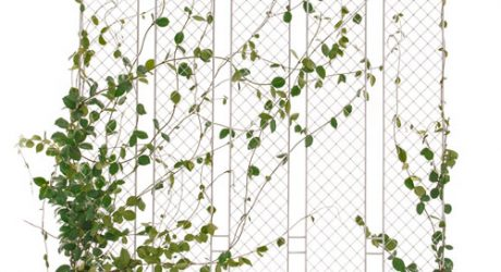 Plant The Fence by Andrea Rekalidis Design