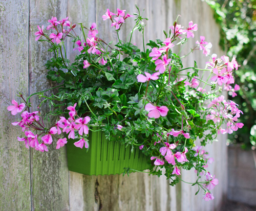 latest design living wall planter the planter is made of a sturdy hard shell with its own tank with holes to distribute
