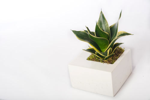 Modern Concrete Planters by Kevin Wood