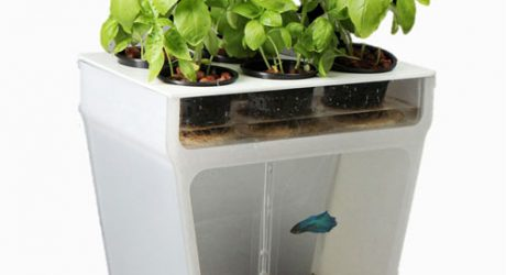 Self-Cleaning Fish Tank Garden by Back To The Roots