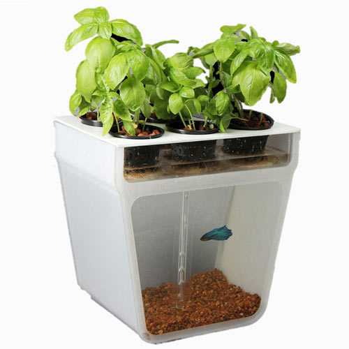 Self Cleaning Fish Tank Garden By Back To The Roots ...