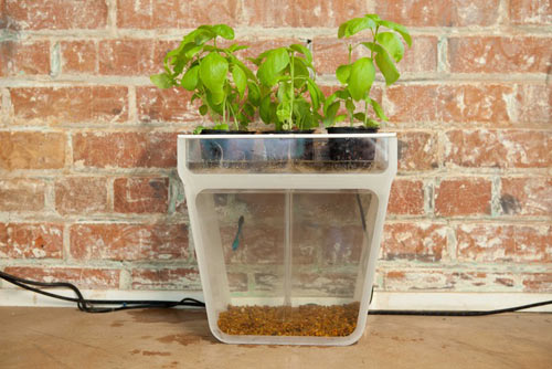 Self Cleaning Fish Tank Garden by Back To The Roots in technology news events home furnishings  Category