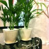 storey-confettora-park-planter