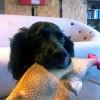 work-deadgood-dog