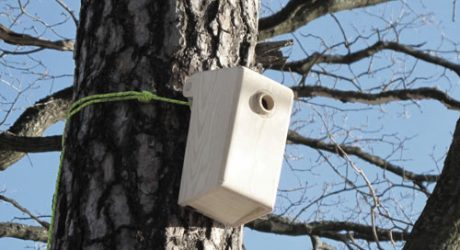 Bird_House by mapog