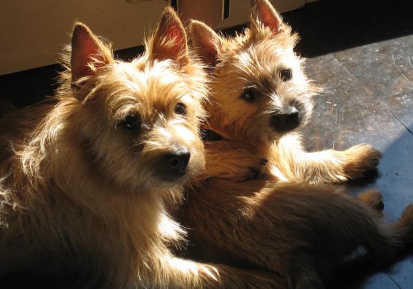 work-aram-dogs