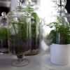 DoD-East-Atwater-Crossing-7-terrariums