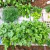Nourishmat-Garden-2