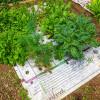 Nourishmat-Garden-6