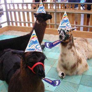Happy 9th Birthday to Us!