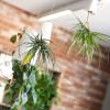 Where-I-Work-BIO-Agency-11-plants