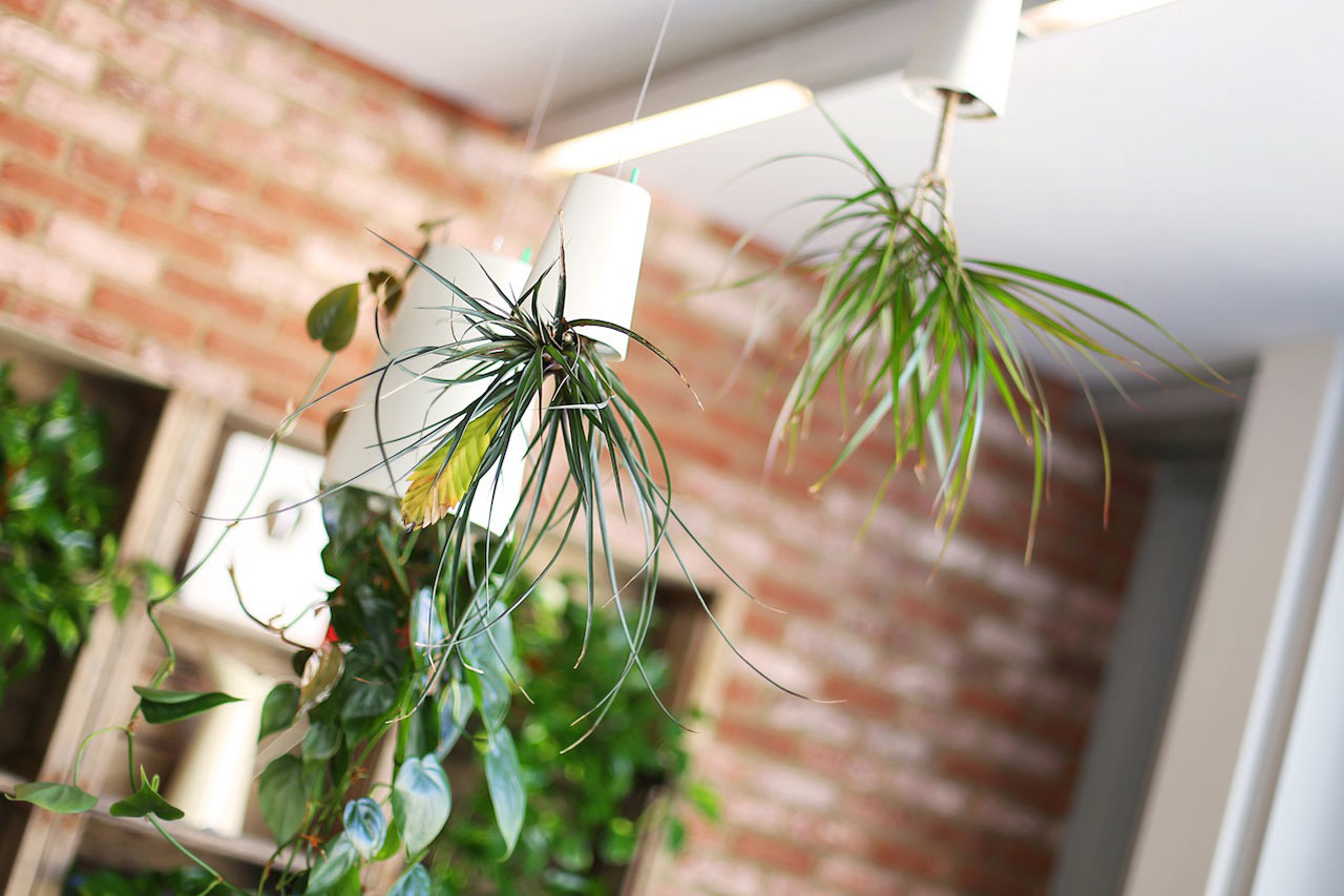 Where-I-Work-BIO-Agency-11-plants