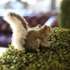 Where-I-Work-BIO-Agency-6-squirrel