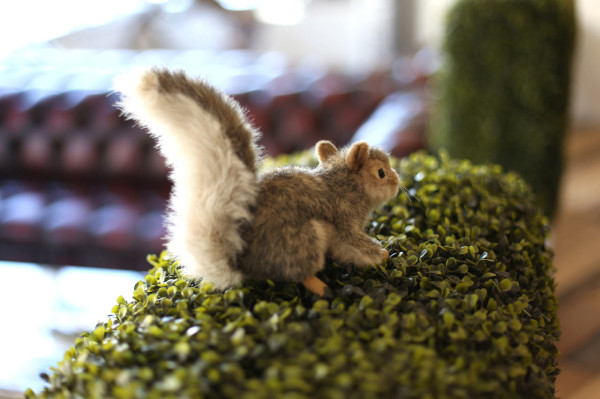 Where-I-Work-BIO-Agency-6-squirrel