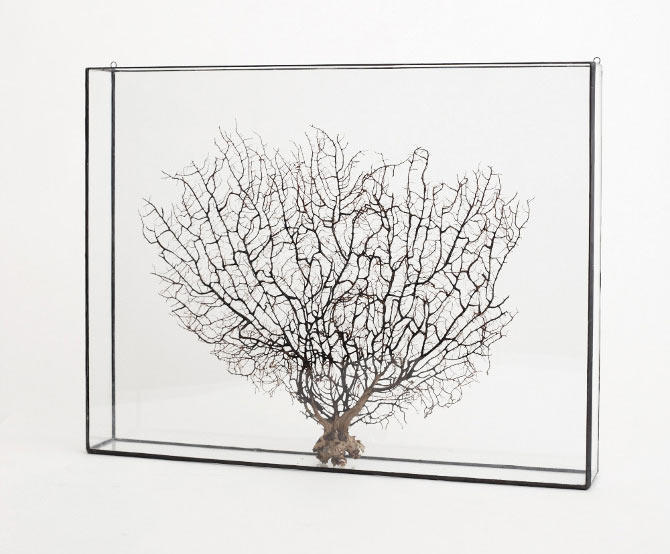 plain-box-glass-frame-shadowbox-display-case